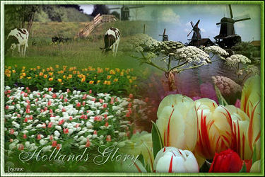 Hollands Glorie - Dutch Glory